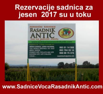 Letnja predprodaja sadnica voća za jesen 2017
