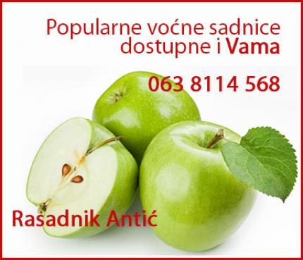 Kvalitetne voćne sadnice stubasto i mini voće, l