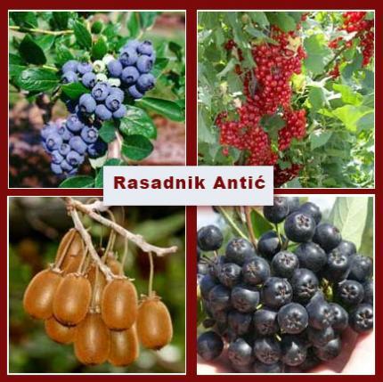 Kvalitetne sadnice voća... brza pošta