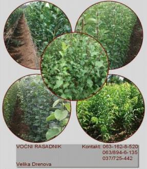 Ssadnice vocnih sadnica Petkovic
